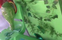Colors Day Celebration for PRE-KG, LKG, UKG Kids on 27-10-17